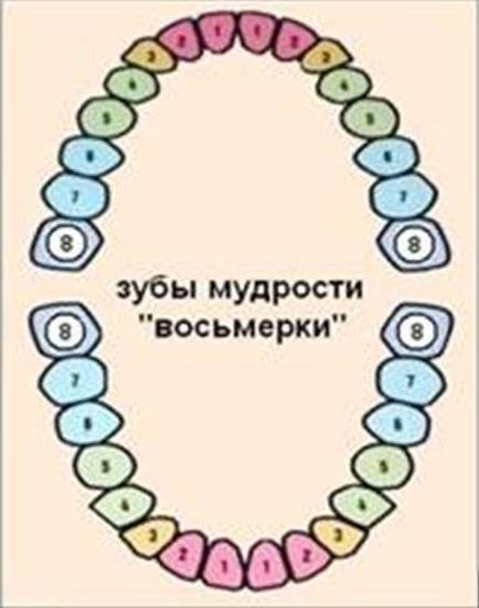Презентация на тему:  зубы 1 строение зубов зубы являются основной частью зубного аппарата